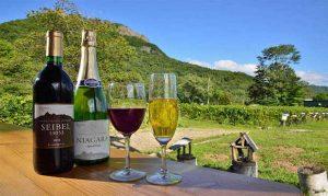 Read more about the article ดื่มไวน์สำหรับมือใหม่ มีวิธีการดื่มยังไง
